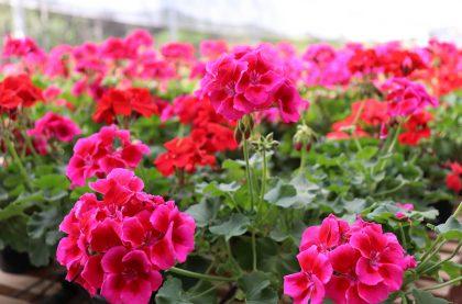 Nativa Flores e Plantas